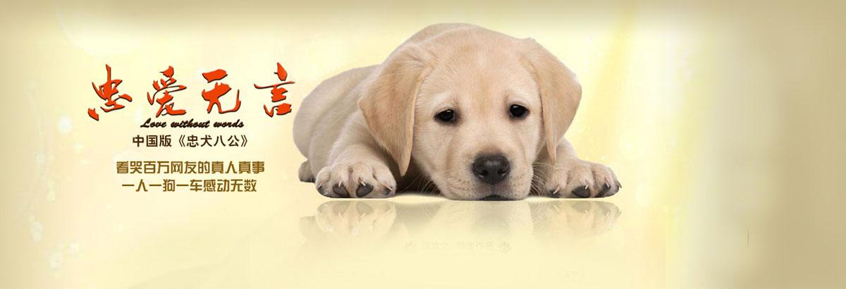 《忠爱无言》中国版忠犬八公